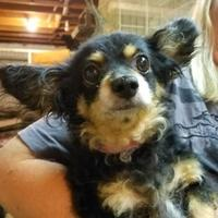 Adopt A Pet :: Payton - Heber City, UT