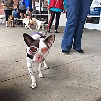 Adopt A Pet :: Beesly - Sharon Center, OH