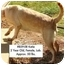 Photo 2 - Labrador Retriever Dog for adoption in Zanesville, Ohio - # 859-08 Katie - RESCUED!