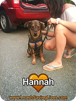 Shepherd (Unknown Type) Mix Dog for adoption in Pitt Meadows, British Columbia - Hannah