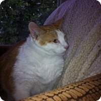 Adopt A Pet :: Kieren - Columbia, SC
