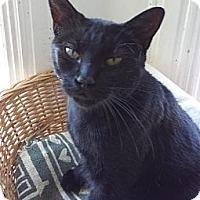 Adopt A Pet :: Cola - Orillia, ON