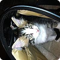 Adopt A Pet :: Benz - Bradenton, FL
