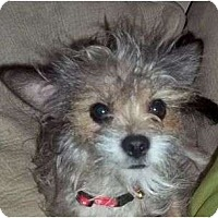 Adopt A Pet :: Rochelle - Plainfield, CT