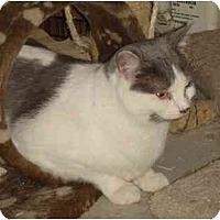 Adopt A Pet :: Winnie - Chesapeake, VA