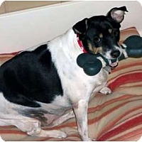 Adopt A Pet :: Molly Dooker - Detroit, MI