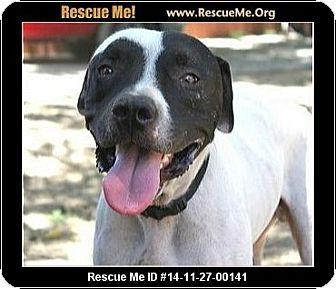 Pointer Mix Dog for adoption in west hollywood, California - Hobbs