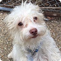 Adopt A Pet :: Vegas - North Little Rock, AR