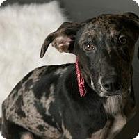 Adopt A Pet :: Frosty - Louisville, KY