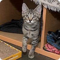 Adopt A Pet :: Holland - Wilmington, DE