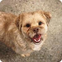 Adopt A Pet :: Stanley - Redwood City, CA