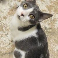 Adopt A Pet :: Renny - Westville, IN