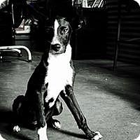 Adopt A Pet :: Lalu - Cedar Creek, TX