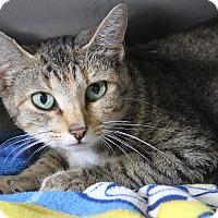 Adopt A Pet :: Beatrix (Pregnant) - Marietta, OH