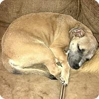 Adopt A Pet :: MORGAN - PARSIPPANY, NJ