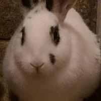 Adopt A Pet :: Frisco - Idaho Falls, ID