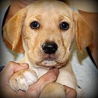 Adopt A Pet :: Morgan - Southbury, CT