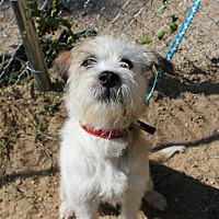 Adopt A Pet :: Scoot - Muskegon, MI