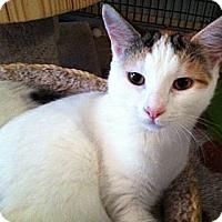 Adopt A Pet :: Lennox, Dawson, & Bowie - Deerfield Beach, FL