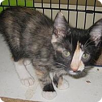 Adopt A Pet :: Splash - Dallas, TX