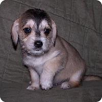 Adopt A Pet :: Rocky - La Habra Heights, CA