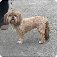 Adopt A Pet :: BRIT - Rossford, OH