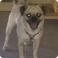 Adopt A Pet :: Carlos - Phoenix, AZ