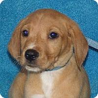 Adopt A Pet :: Al - Phillips, WI