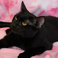 Adopt A Pet :: Ebony - Greensboro, NC