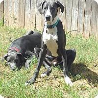 Adopt A Pet :: Duck - Austin, TX
