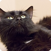 Adopt A Pet :: Shelley - Chicago, IL