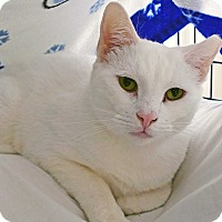 Adopt A Pet :: Snow - Victor, NY