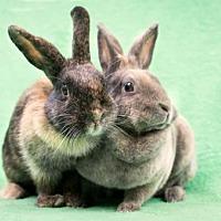 Adopt A Pet :: Mopsy & Flopsy - Baton Rouge, LA