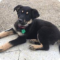 Adopt A Pet :: Betty - Regina, SK