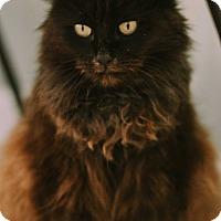 Adopt A Pet :: Dreamer $75 - Seneca, SC