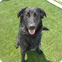 Adopt A Pet :: Orion - Meridian, ID