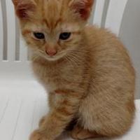 Adopt A Pet :: Carmen - Decatur, IL
