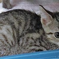 Adopt A Pet :: Simon - Port Clinton, OH