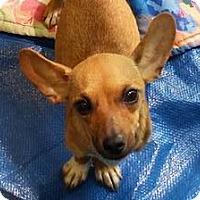 Adopt A Pet :: Delana - Buena Park, CA