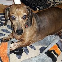 Adopt A Pet :: Gertie - Salem, OR