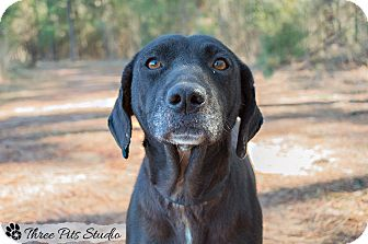 Labrador Retriever Mix Dog for adoption in Hazlehurst, Georgia - Maggie