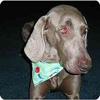Adopt A Pet :: Josie  **ADOPTED** - Eustis, FL