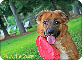 Chow Chow Mix Dog for adoption in Paducah, Kentucky - Chewy