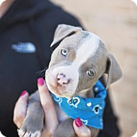 Adopt A Pet :: Oakley - Houston, TX