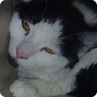 Adopt A Pet :: Dew - Hamburg, NY