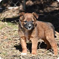 Adopt A Pet :: Tait - South Dennis, MA