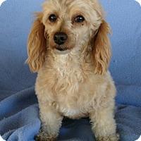 Adopt A Pet :: Cassie - Temecula, CA