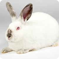 Adopt A Pet :: Ivory - Kingston, ON