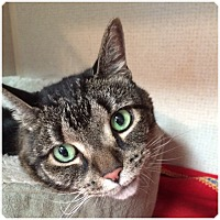Adopt A Pet :: LADY - Hamilton, NJ