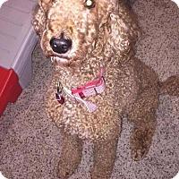 Adopt A Pet :: Copper - Chester, IL